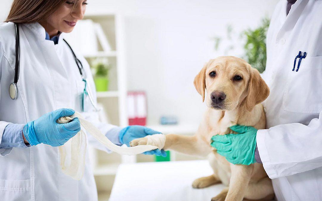 Mercado Pet busca mão de obra qualificada